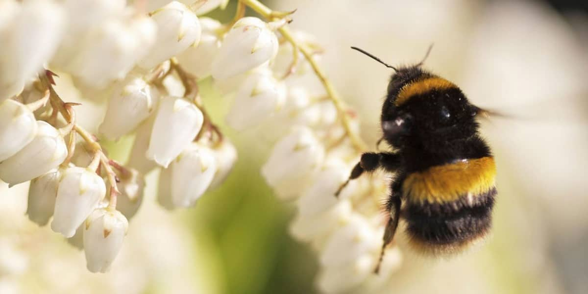 bee-fayre-enys-gardens-things-to-do-in-the-summer-holidays-falmouth-cornwalll
