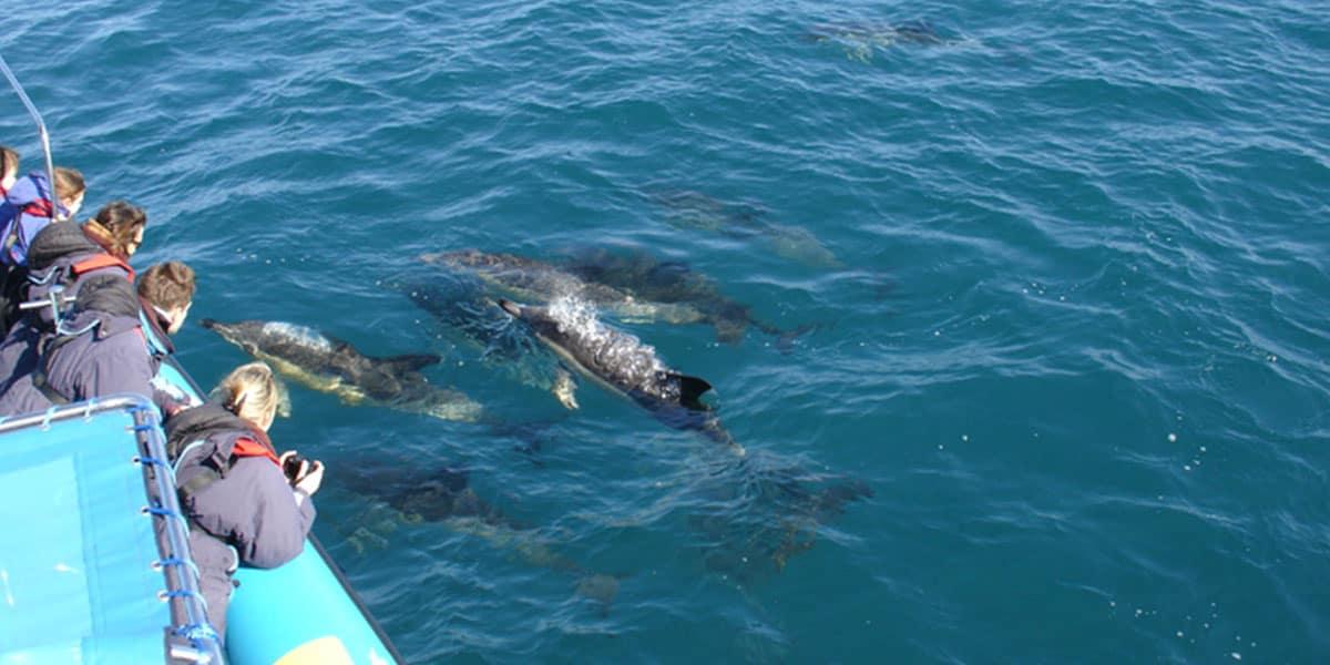 the-working-boat-orca-sea-safaris-falmouth-cornwall