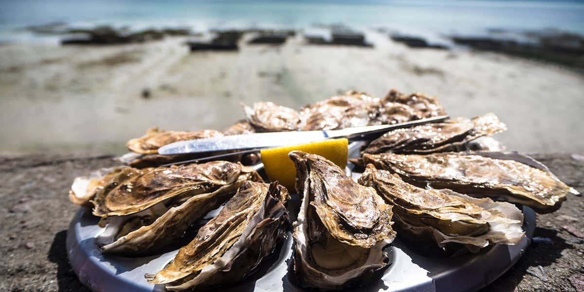 Falmouth Oyster Festival 2019 Nick Hodges Scallop Recipe