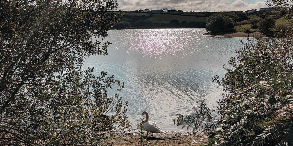 argal-lake-dog-walking-in-cornwall-falmouth-the-working-boat